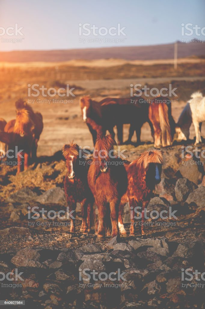 Group of horses stock photo