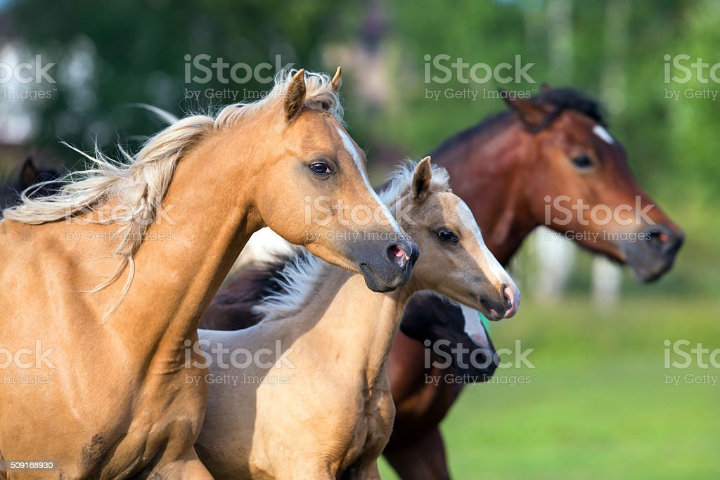 Group of horses running in field freedom stock photo
