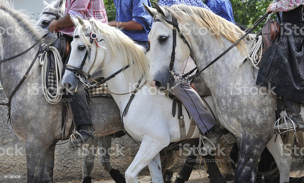 A group of horses trotting along together  stock photo