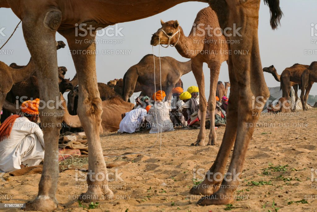 A group of Indian Rajasthani rural men in their native attire attends Pushkar Camel Fair stock photo