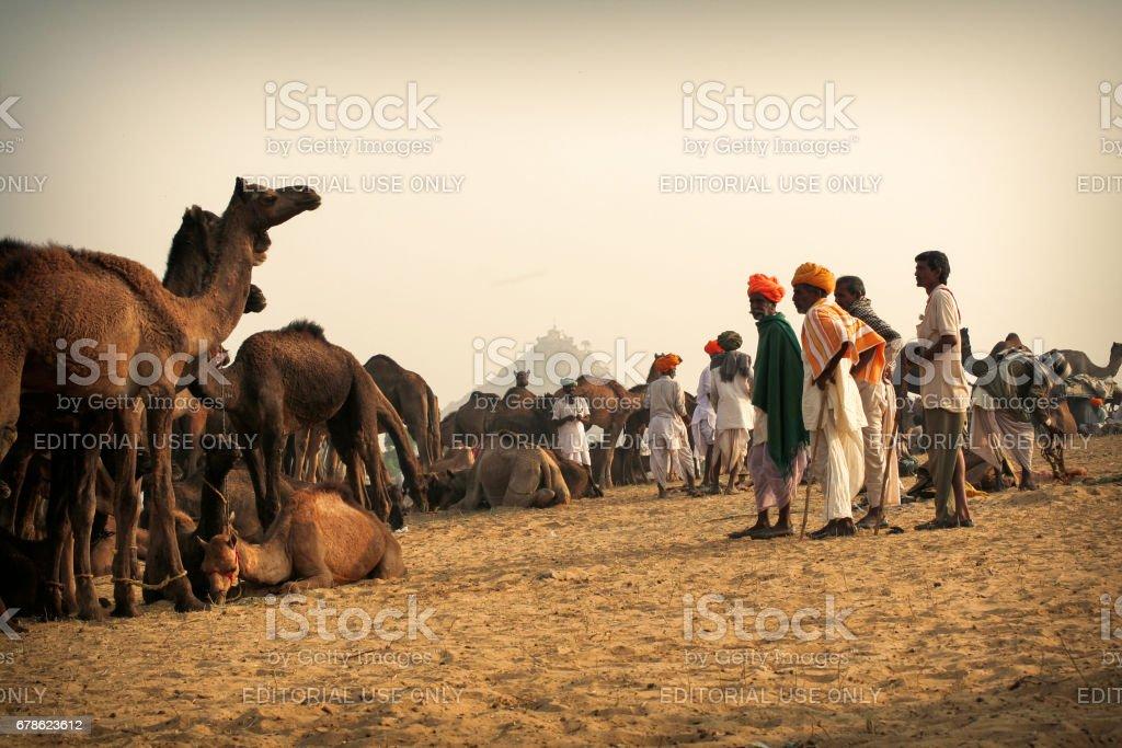 A group of interested camel buyers going through selection process at Pushkar Camel Fair stock photo