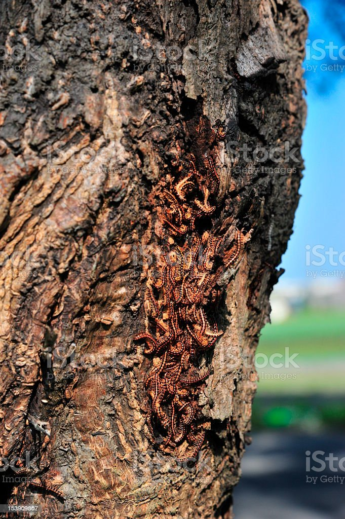 Group of Millipede on Trunk stock photo