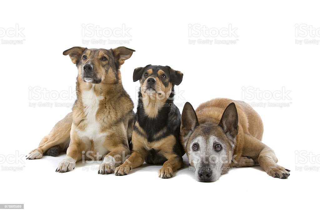 group of mixed-breed dogs stock photo