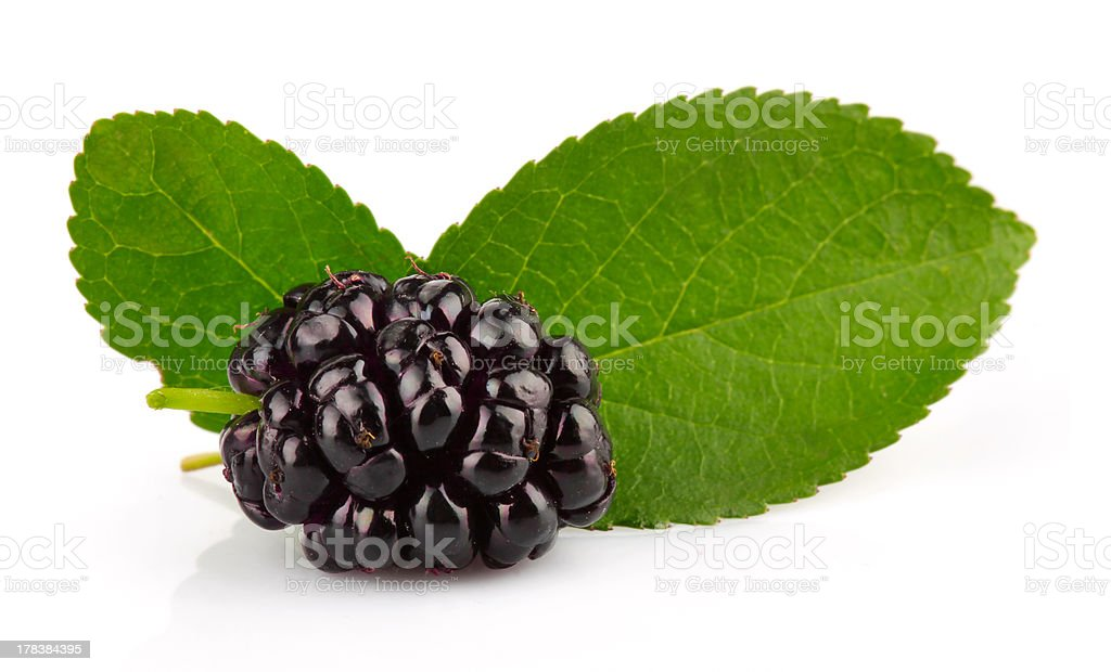 Group of mulberries with green leaves isolated stock photo