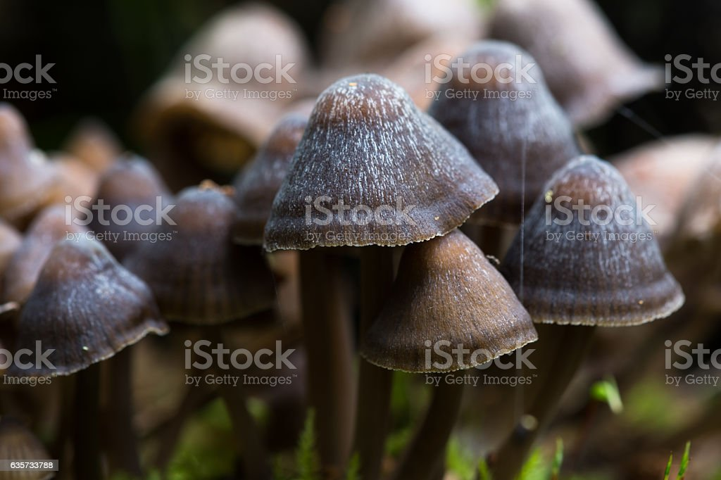 Group of mushrooms on a tree stock photo
