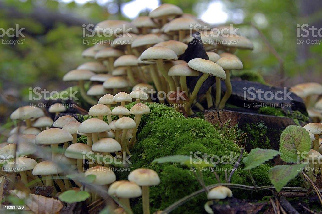 group of mushrooms stock photo
