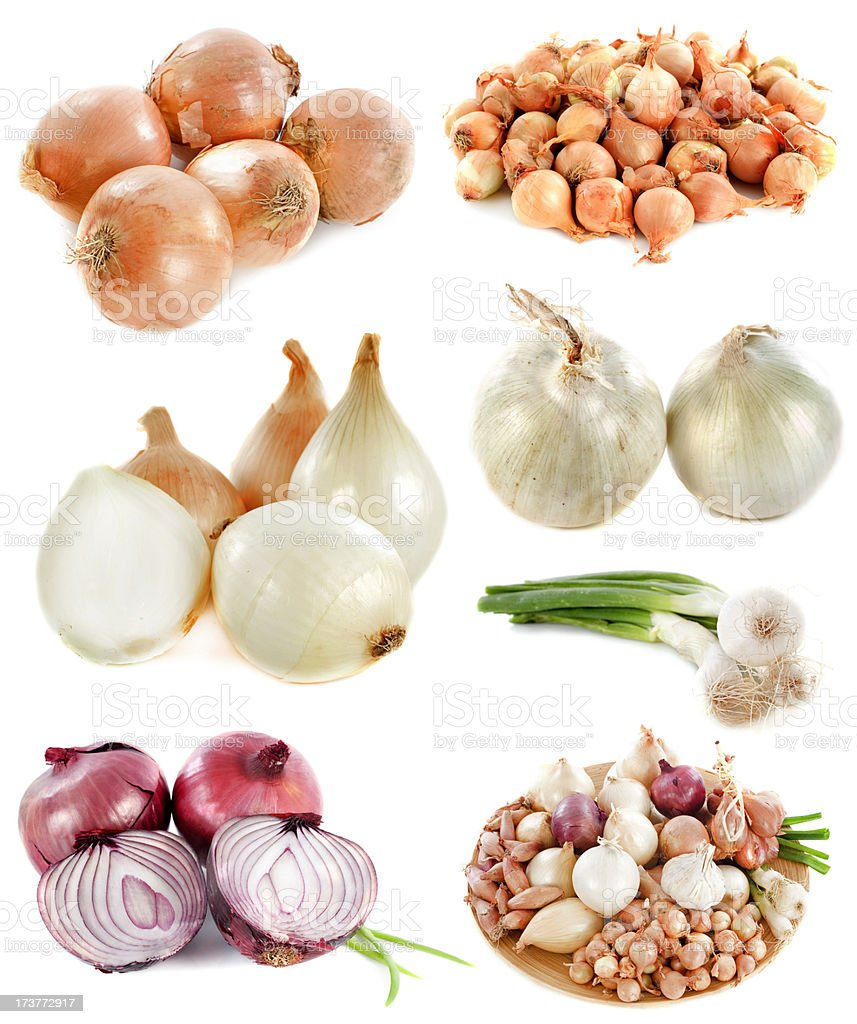 group of onions stock photo