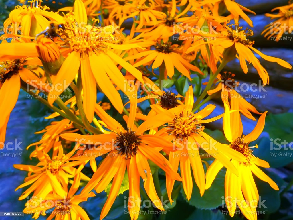 Group of orange flowers stock photo