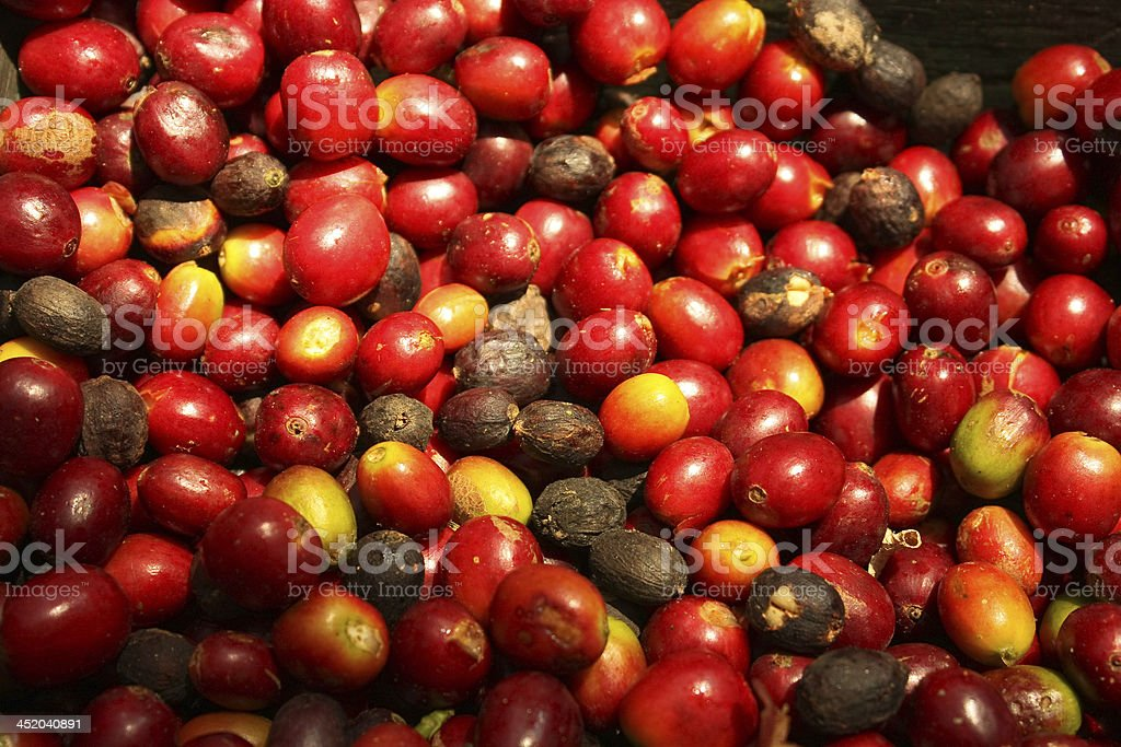 Group of organic coffee beans. royalty-free stock photo