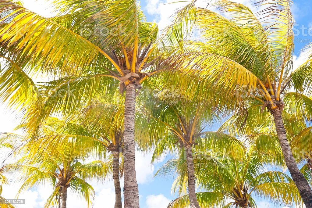 Group of palm trees against blue sunny sky stock photo