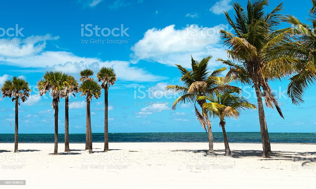 Group of Palm Trees stock photo