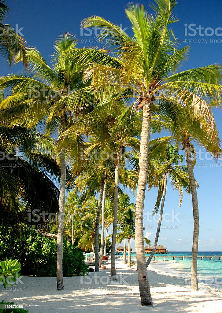 group of palms stock photo