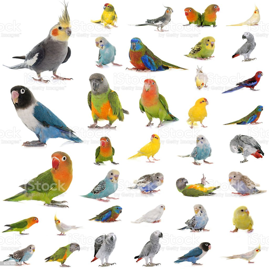 group of parrots stock photo