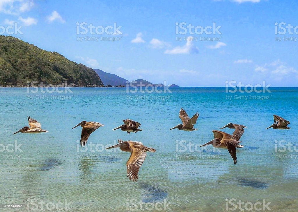 Group of Pelicans flying just above the sea level stock photo