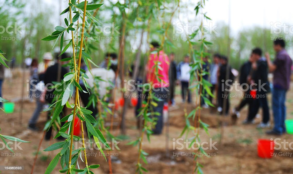 A group of people planting trees stock photo