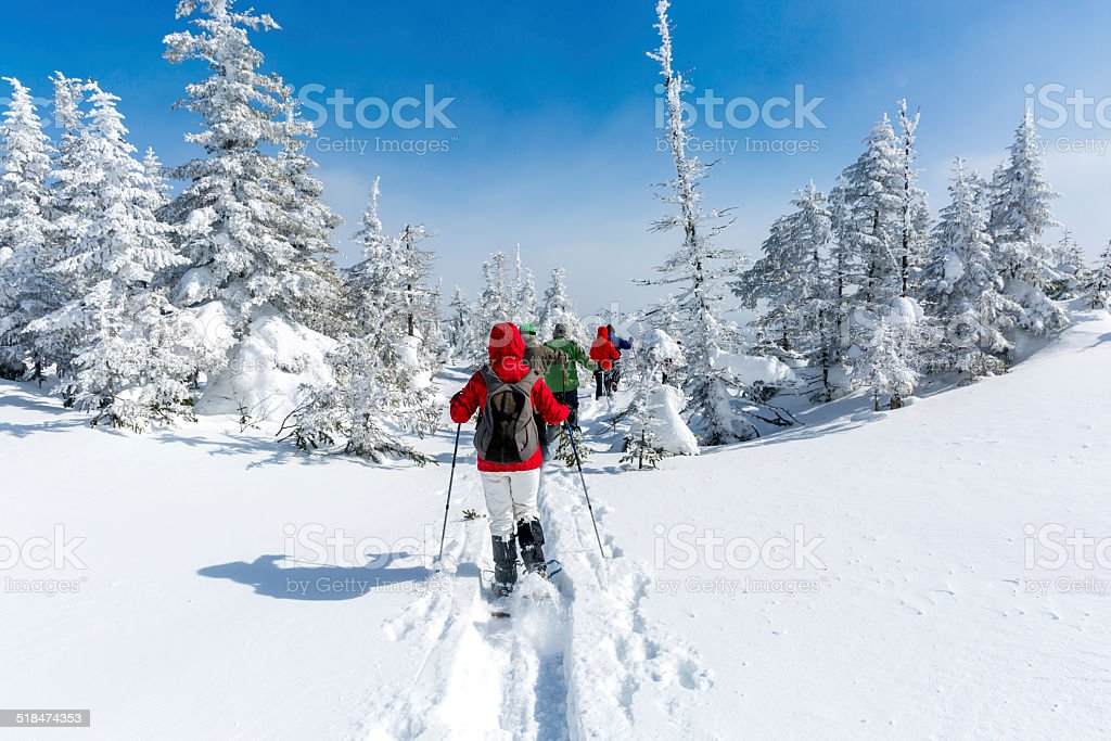 Group of People Snowshoeing in Winter Forest stock photo