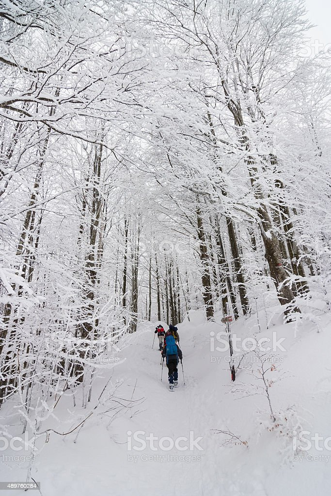 Group of people walking in a forest  with snow rackets stock photo