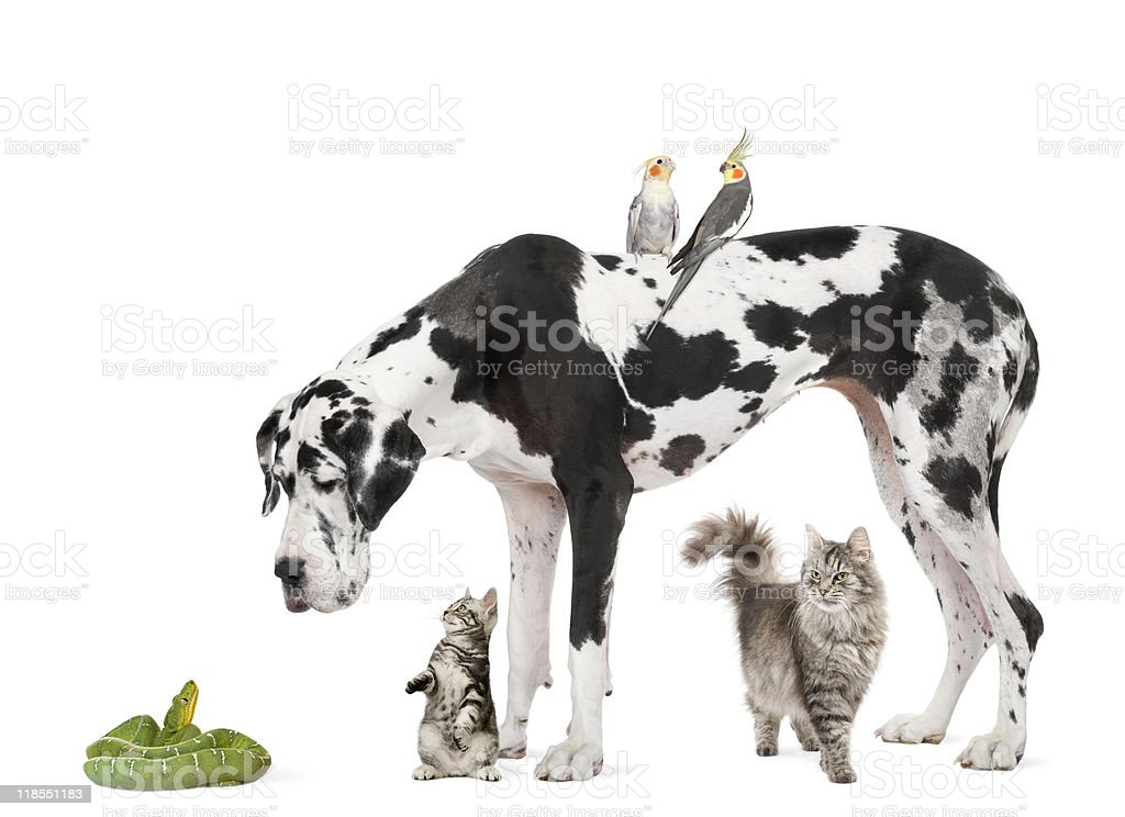 Group of pets against white background royalty-free stock photo