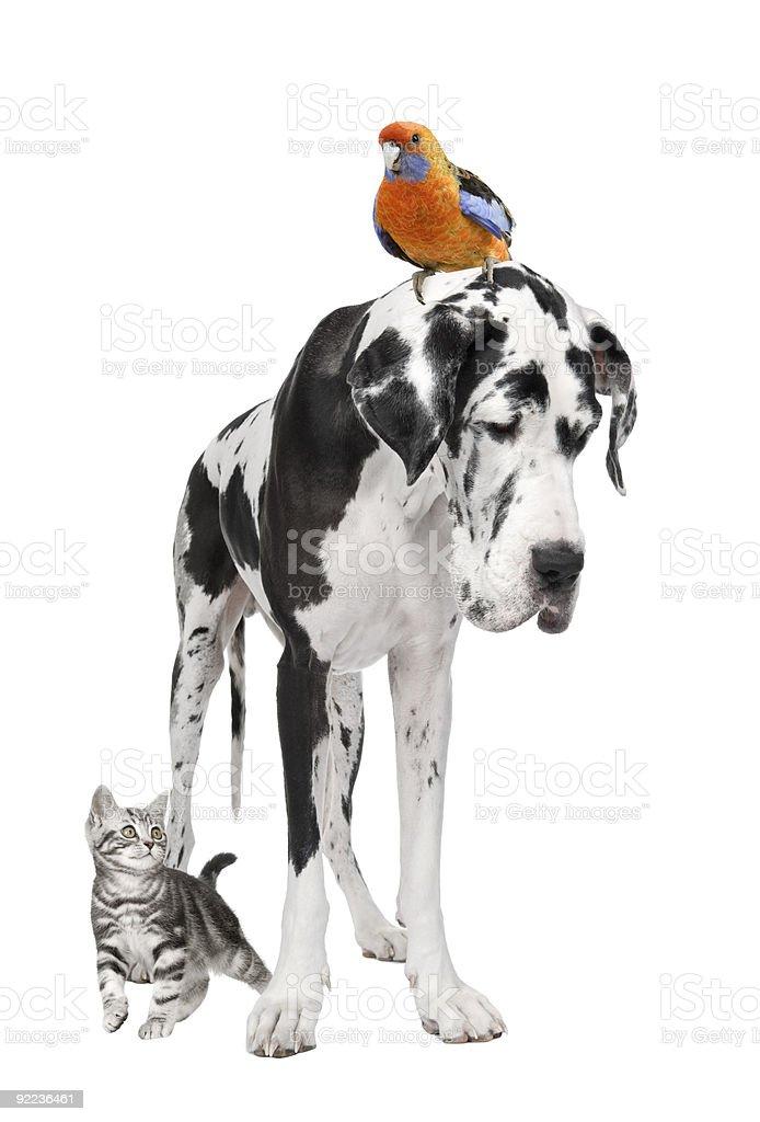 Group of pets : dog, bird, cat stock photo