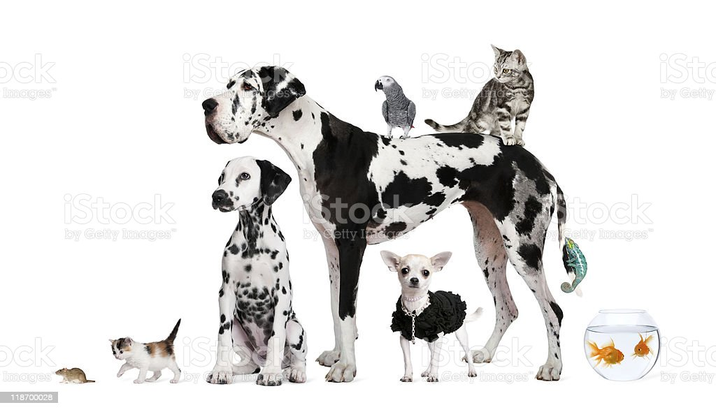 Group of pets - Dog, cat, bird, reptile, rabbit, fish royalty-free stock photo