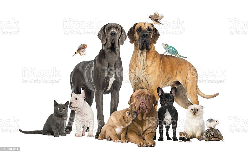 Group of pets - Dog, cat, bird, reptile, rabbit, isolated stock photo
