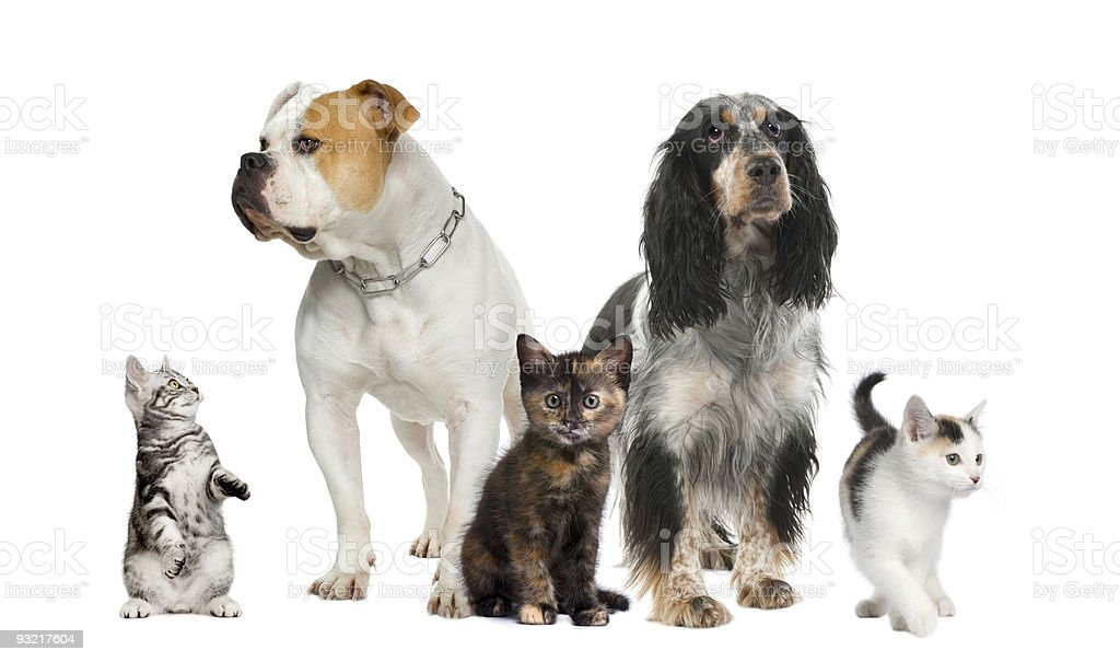 Group of pets : dogs and cats royalty-free stock photo