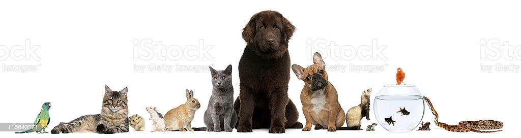 Group of pets sitting, white background. royalty-free stock photo