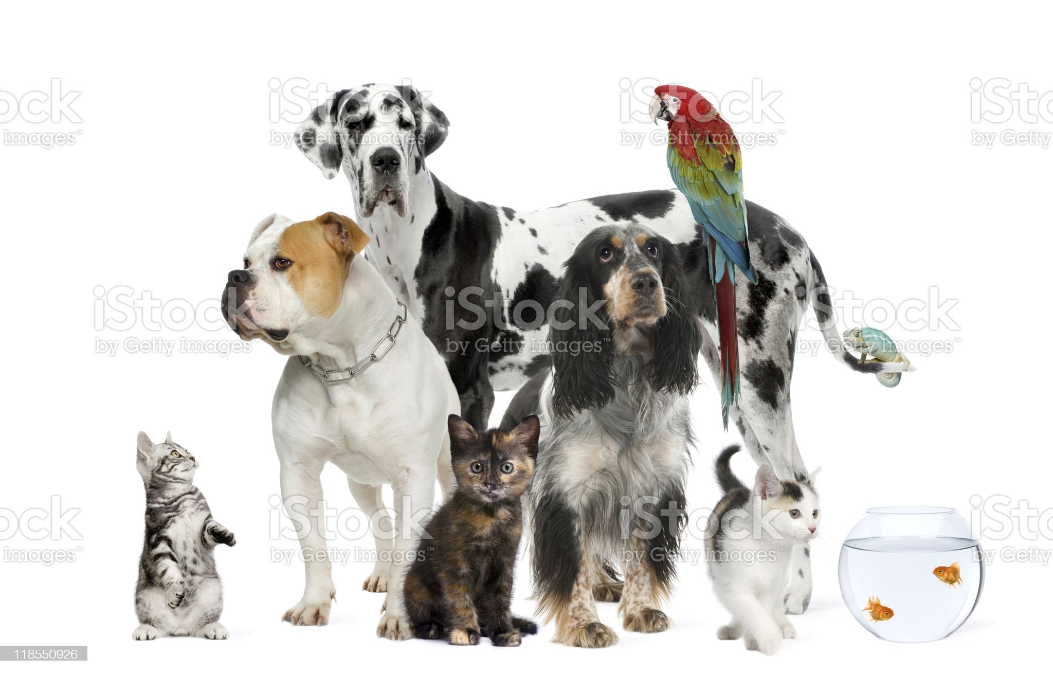 Group of pets standing against white background royalty-free stock photo