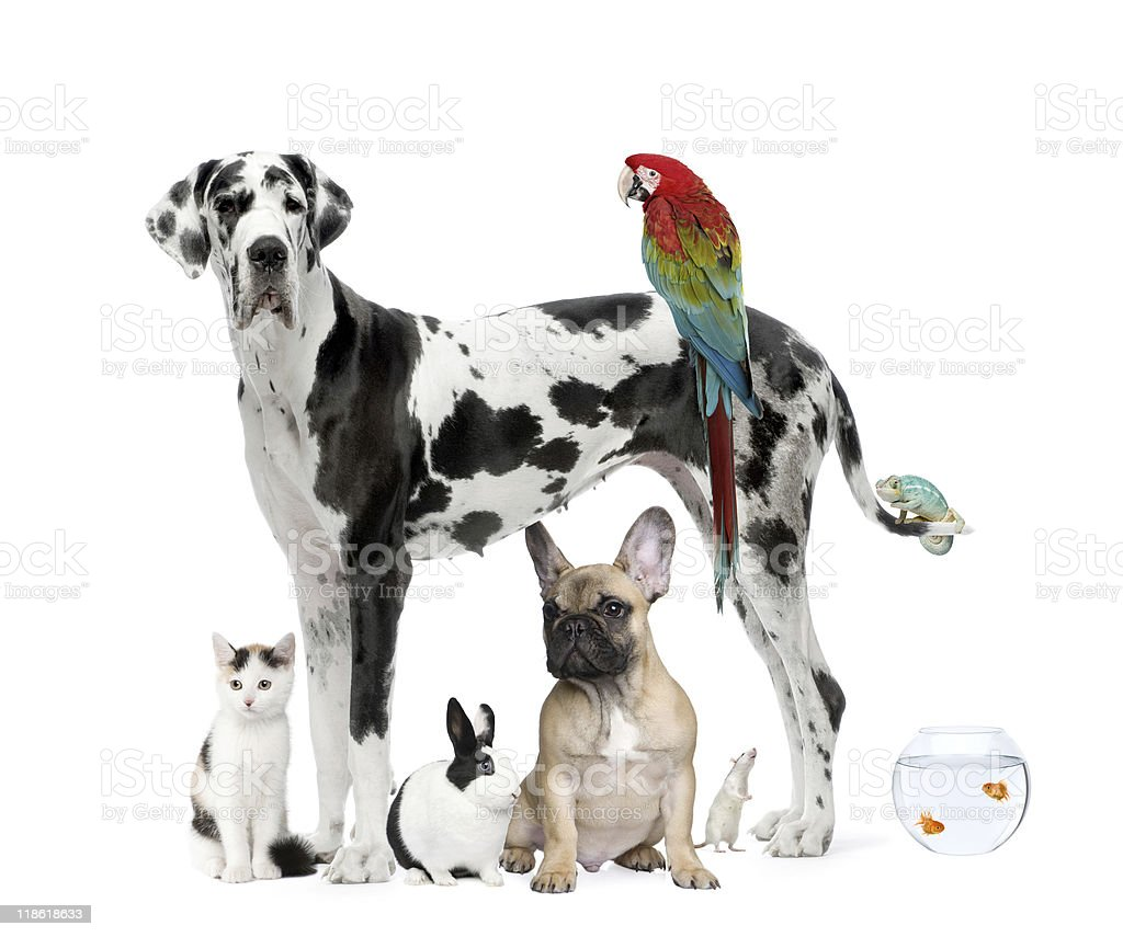 Group of pets standing against white background stock photo