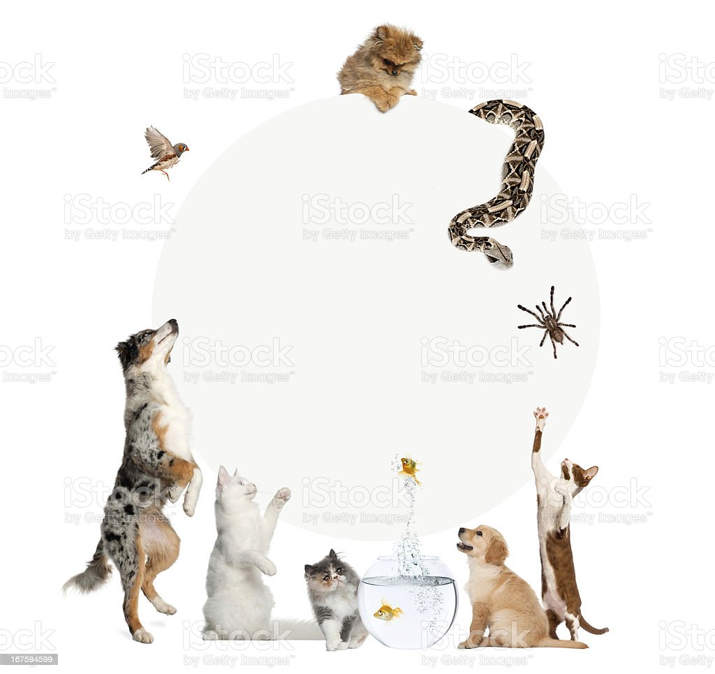 Group of pets surrounding a blank sign royalty-free stock photo