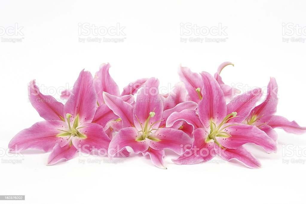 Group of Pink Lilies stock photo