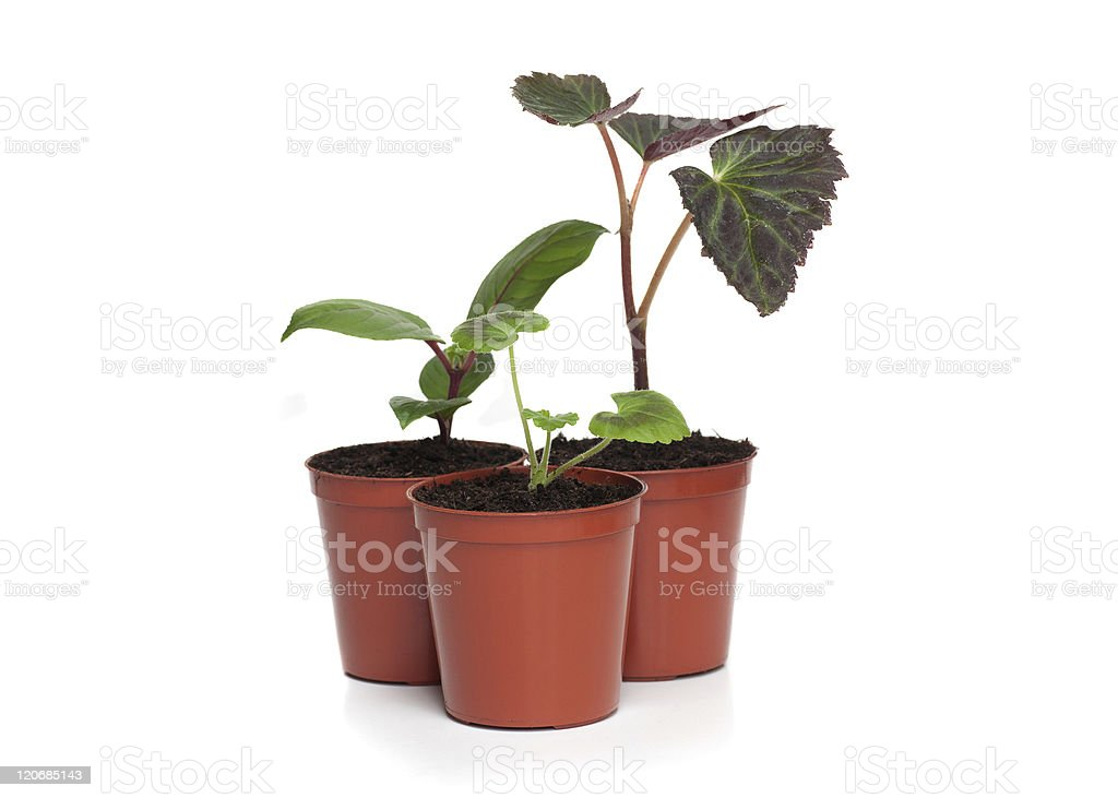 Group of Plant Seedlings royalty-free stock photo