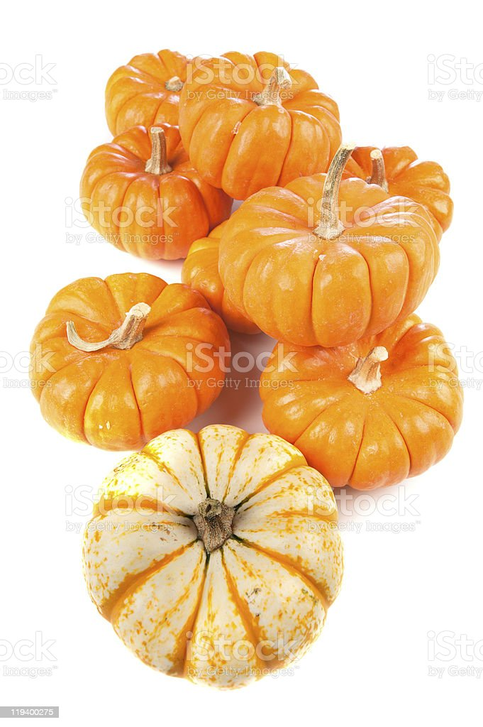 Group of pumpkins on white royalty-free stock photo