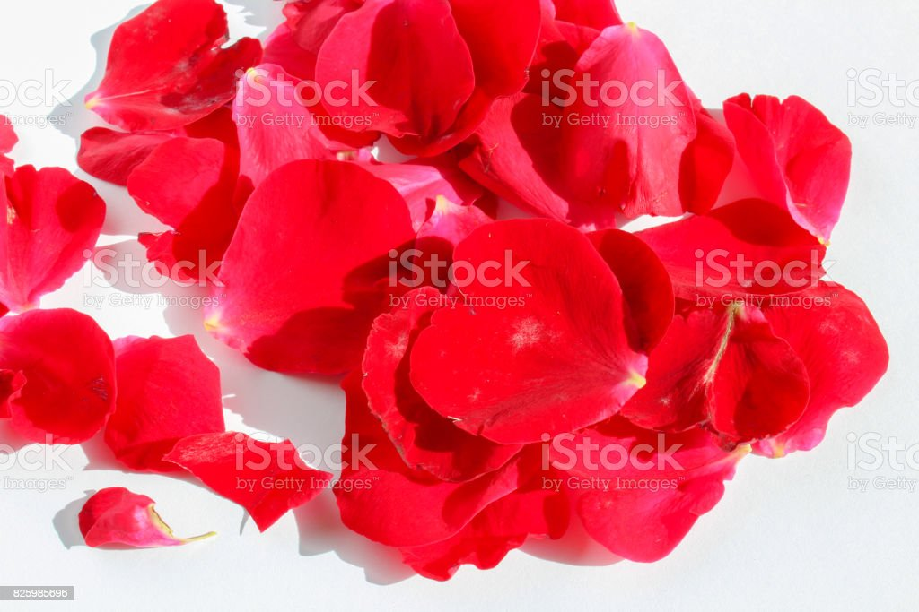 Group of red flower petals on white background stock photo
