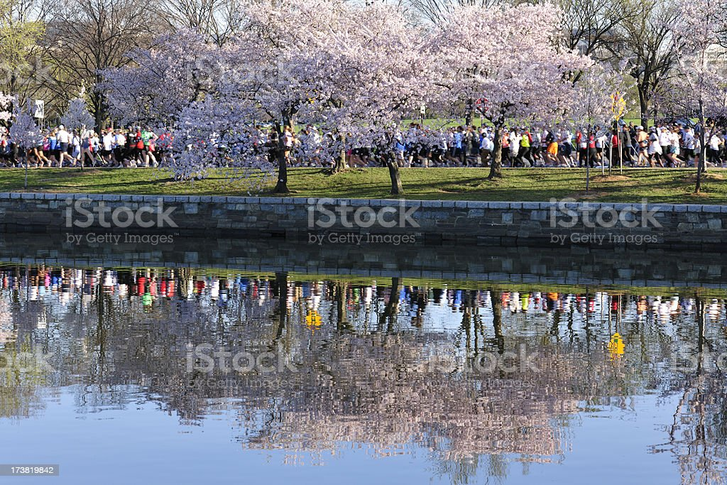 A group of runners pass under spring cherry trees. stock photo