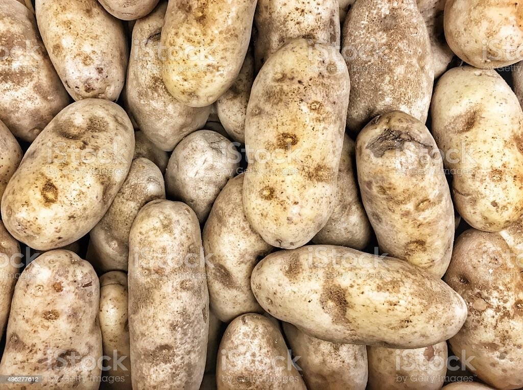 Group of Russet Potatoes stock photo