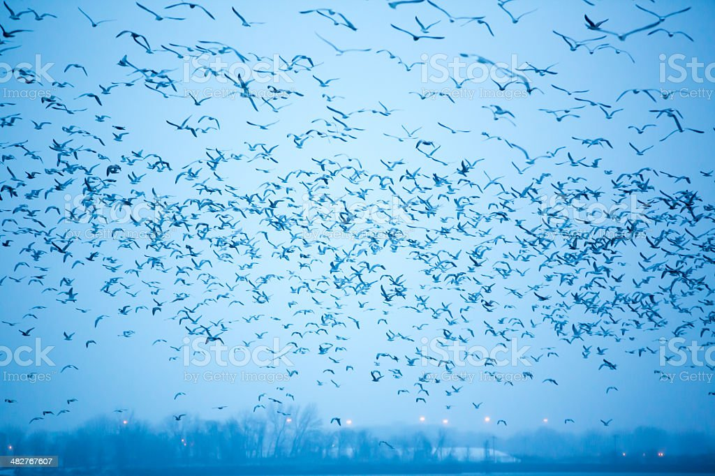 Group of sea gulls flying in the sky royalty-free stock photo