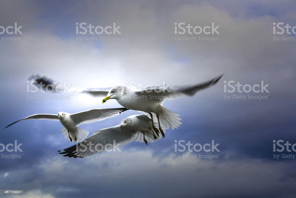Group of seabirds royalty-free stock photo