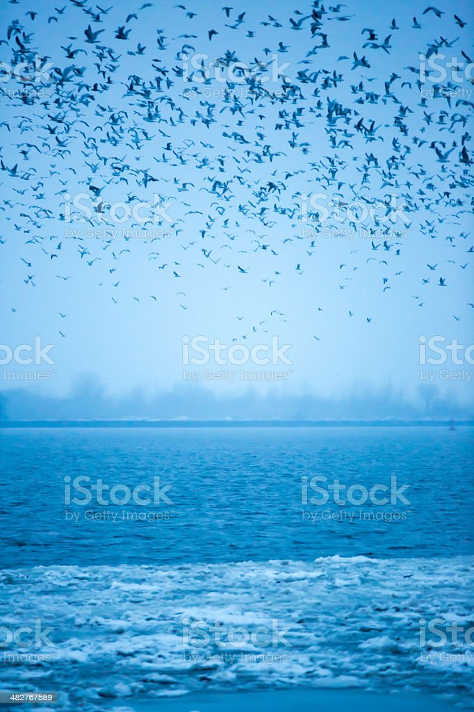 Group of seagulls flying in the sky over ocean royalty-free stock photo