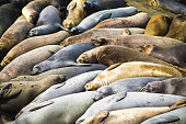 Group of seals resting on beach