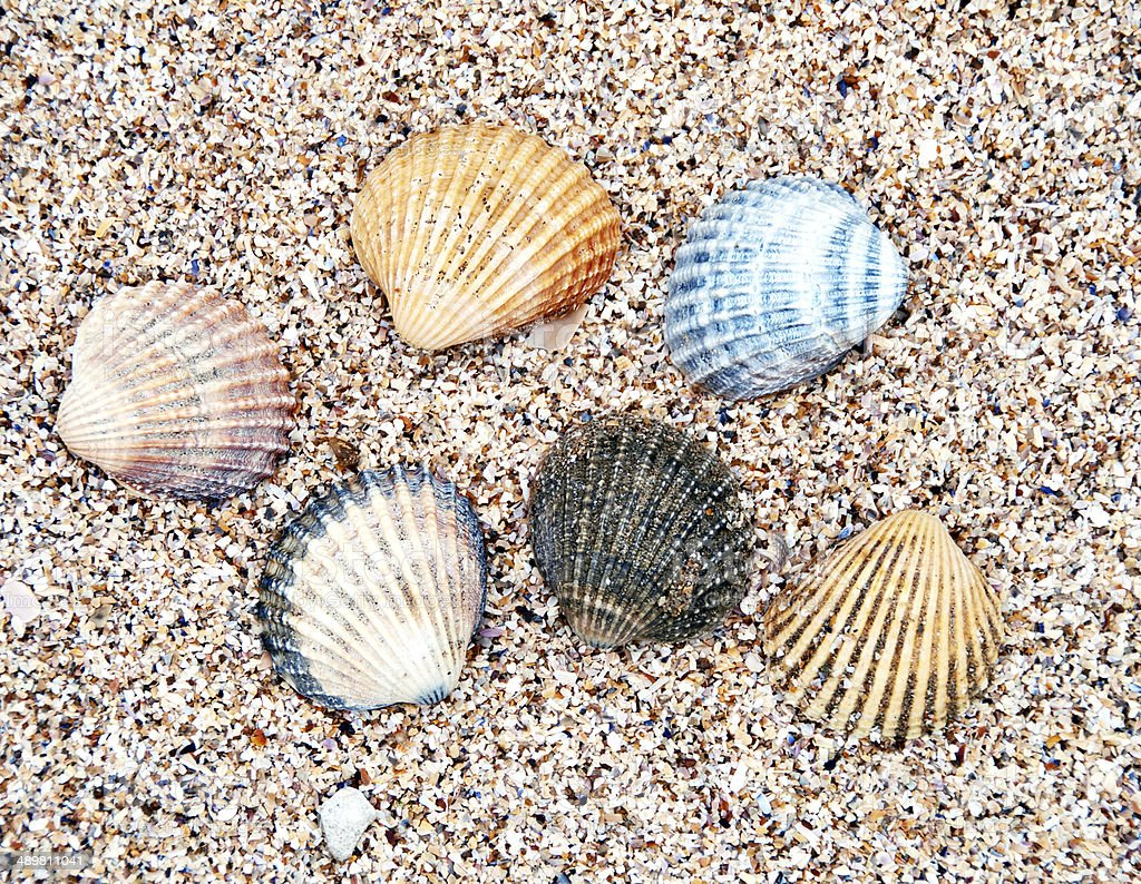 Group of seashells  at the beach royalty-free stock photo
