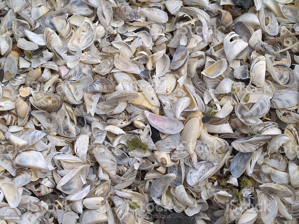 Group of seashells royalty-free stock photo