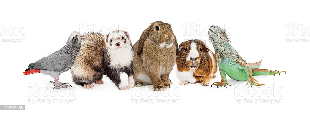 Group of Small Domestic Pets Over White stock photo