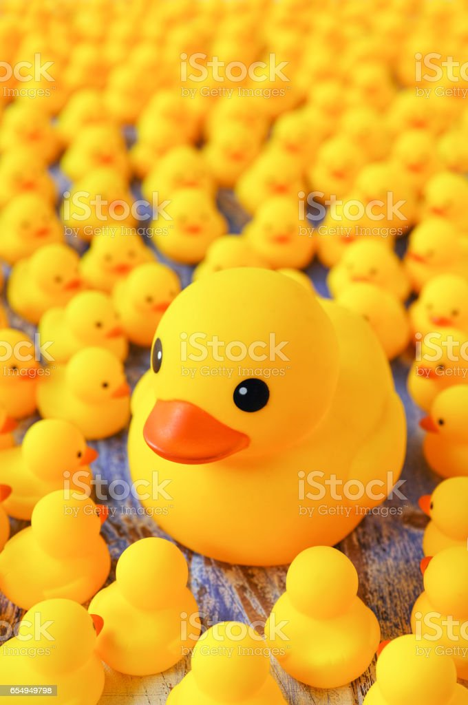 Group of small yellow rubber ducks gathering around one large yellow duck, on a blue coloured wooden background. stock photo