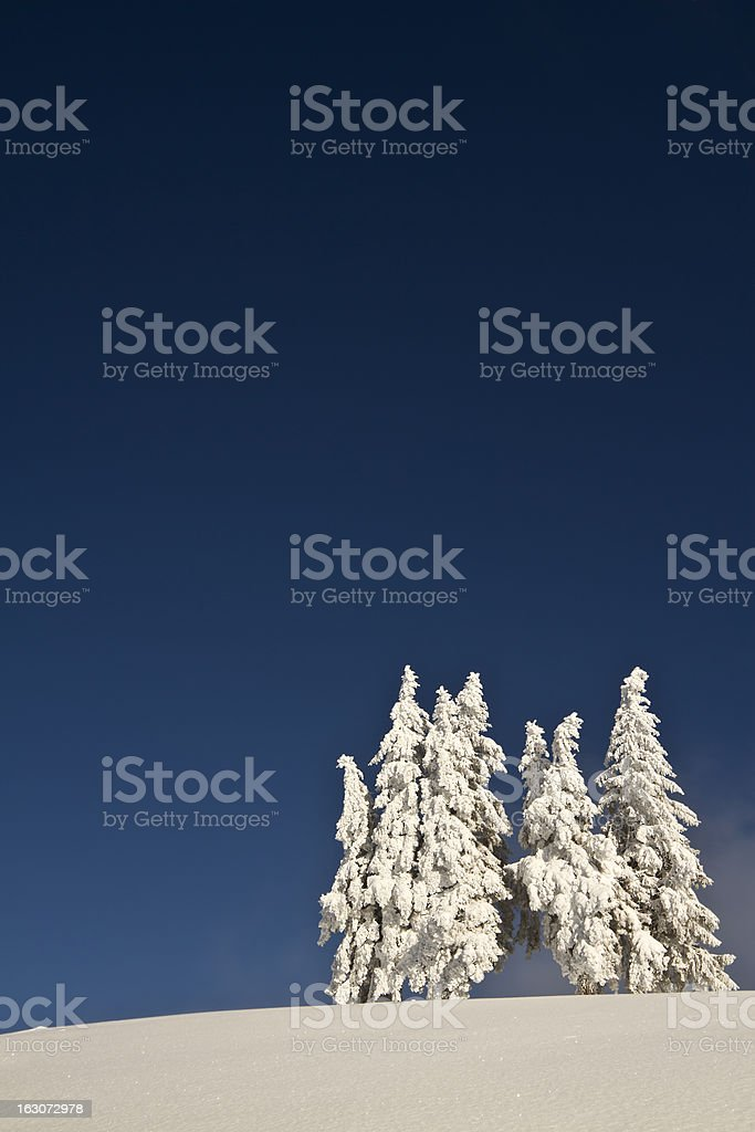 group of snowy fir trees in very deep blue sky royalty-free stock photo