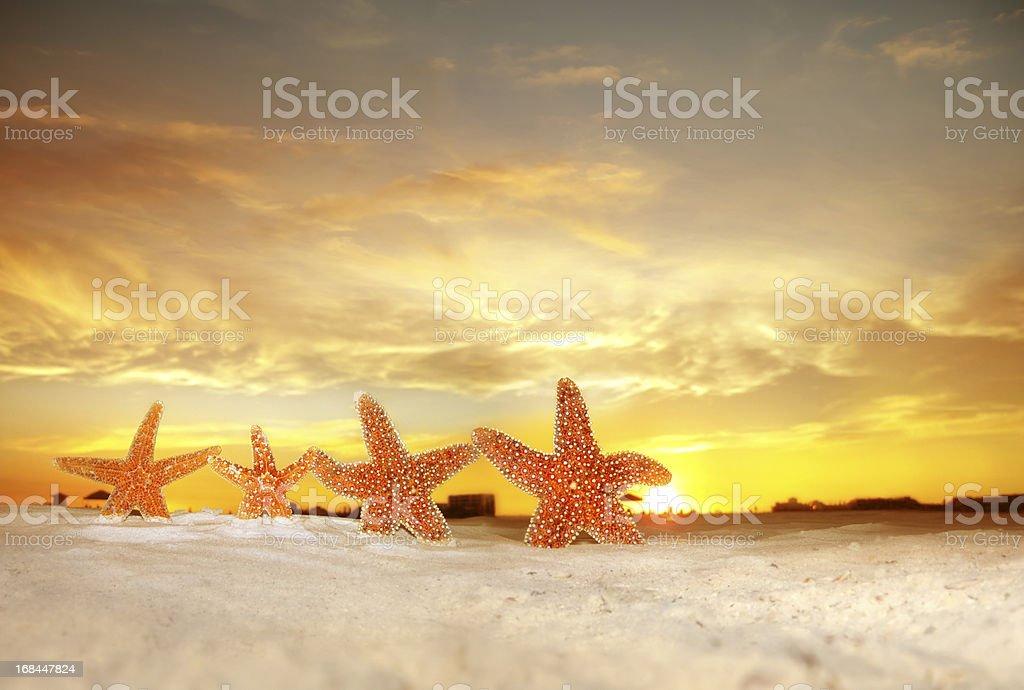 group of starfish on beach over sunset stock photo