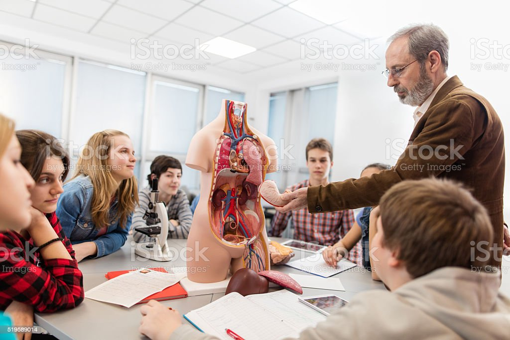 Group of students on an anatomy class in high school. stock photo