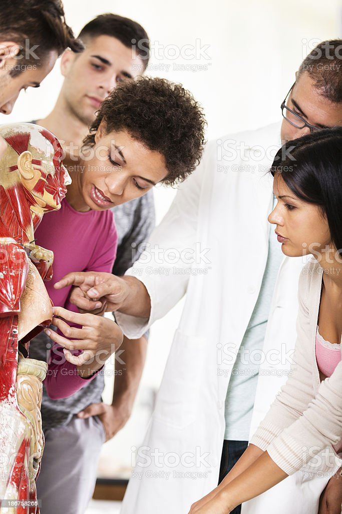 Group of students on anatomy class royalty-free stock photo