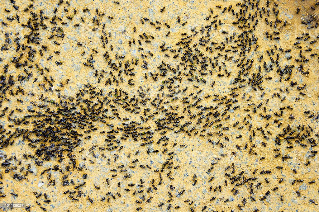 group of termite royalty-free stock photo