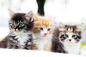 Group of three beautiful cats.